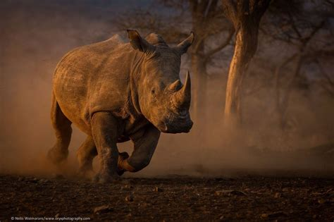 Save the Rhino Trust - Book Namibia Accommodation