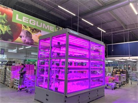 Metro store in Bucharest grows its own aromatic plants in