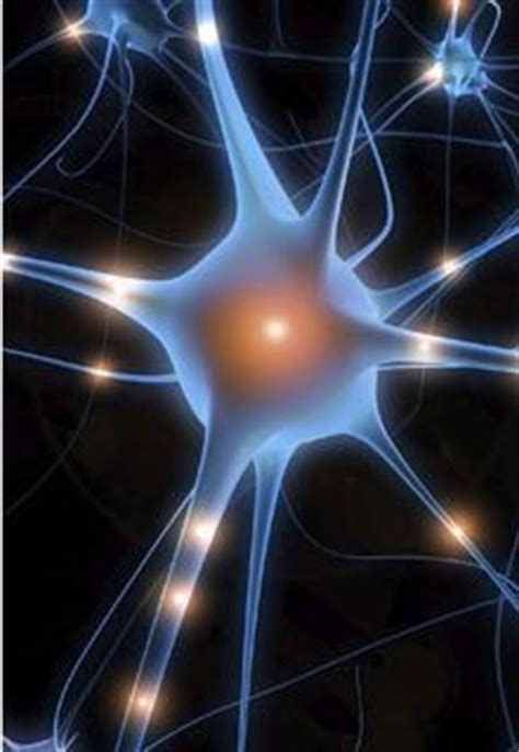 What are Neurotransmitters | Brain In Balance